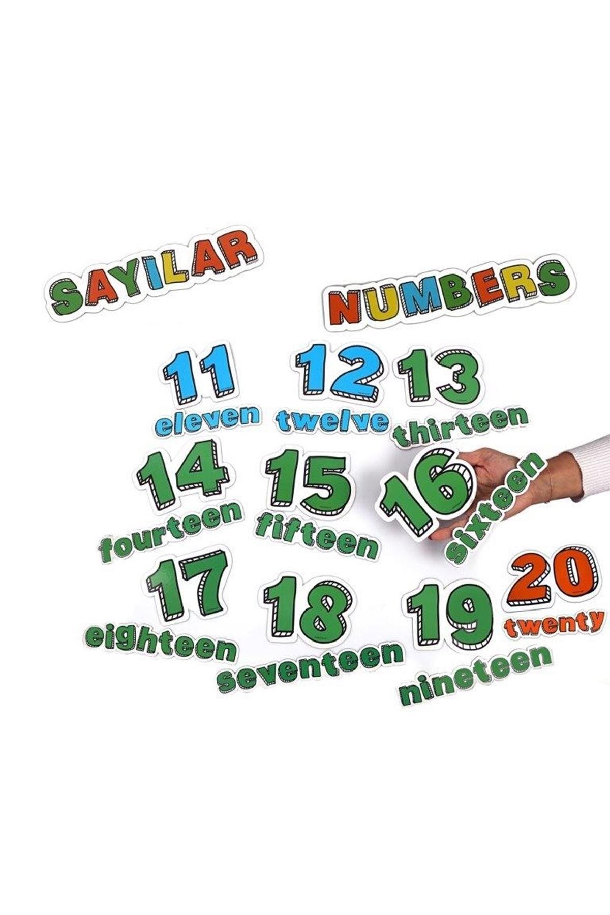 Sayılar (11-20 )